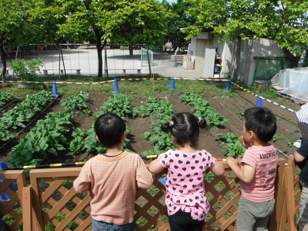 なかの幼稚園 畑